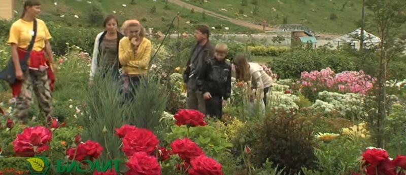 Компоненты выращиваются на полях в предгорьях Алтая