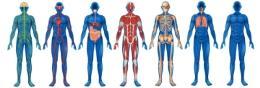 Системы организма человека