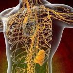 Арго для лимфатической системы организма