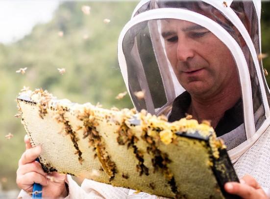 Манука мед производство