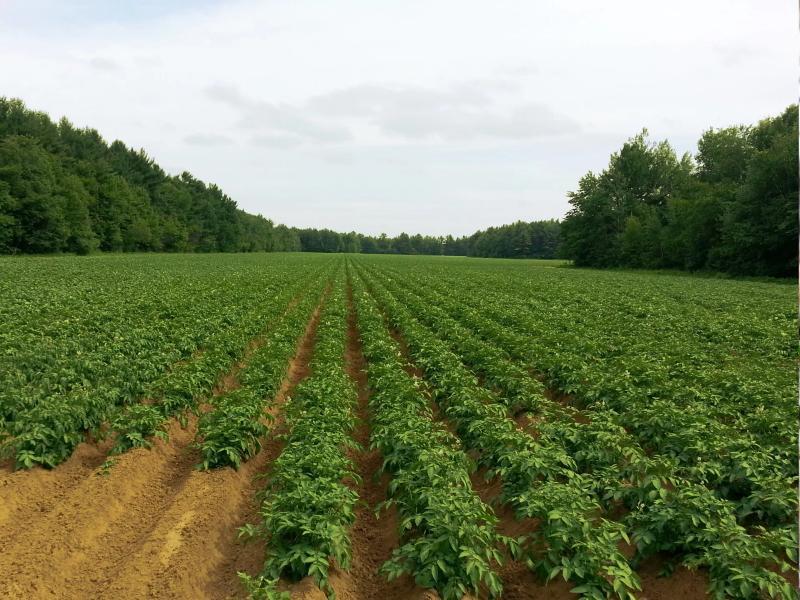 Овощные поля