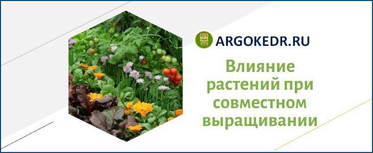 Влияние растений при совместном выращивании