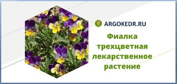 Фиалка трехцветная лекарственное растение