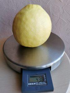Лимон 438 грамм