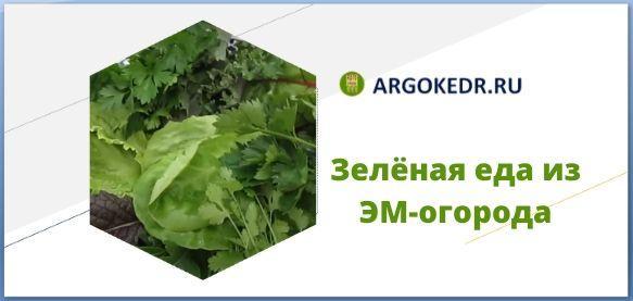 Зелёная еда из ЭМ-огорода