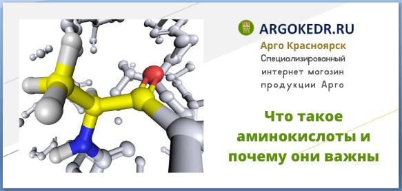 Что такое аминокислоты и почему они важны