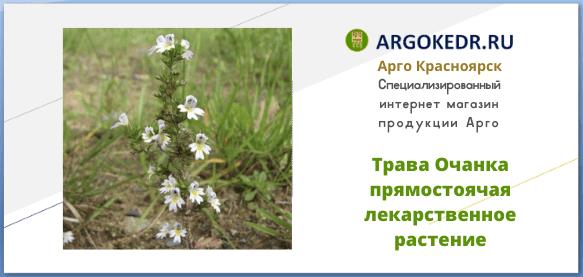 Трава Очанка прямостоячая лекарственное растение