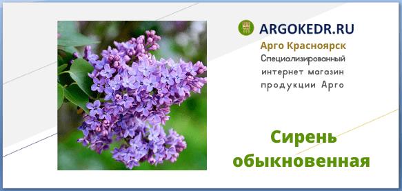 Сирень обыкновенная Syringa vulgaris свойства, описание, фото
